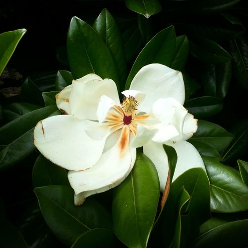 Flower Petal Plant Growth Flower Head Nature White Color Beauty In Nature Green Color Outdoors Day Floralphotography Floral Photography Flowerphotography Flowers,Plants & Garden Flower And Garden Nature Nature Photography Naturephotography Floral Freshness Close-up Orchid Fragility Fresh On Eyeem