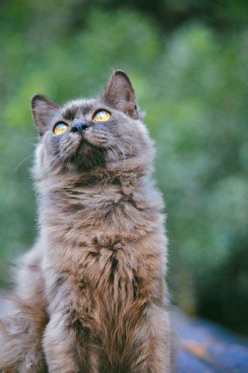 Little big jack Cat Lovers Cat Cat Photography Catlover Catportrait Vscomalaysia Vscomalaya Nature_collection Catoftheday Catsofinstagram Cats 🐱 Cateyes Vscomalaysian Vscoperak Vscocam VSCO