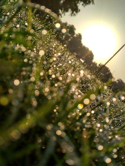 Close up Tree