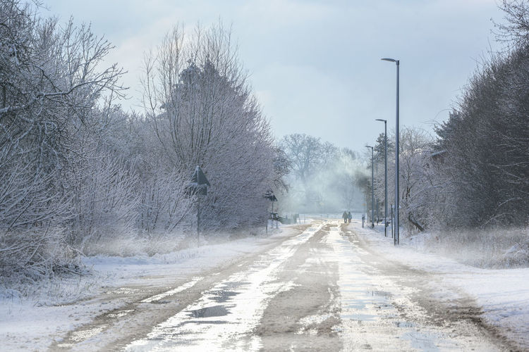 Empty road along bare trees during winter