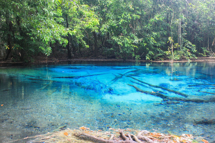 Water Blue Krabi Beauty In Nature Blue Day Forest Growth Hot Spring Nature No People Outdoors Plant Pool Reflection Scenics - Nature Swimming Pool Tranquil Scene Tranquility Transparent Tree Turquoise Colored Water Water Blue