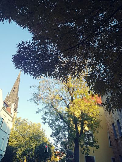 Tree Architecture Low Angle View Built Structure Building Exterior Day Growth No People Outdoors Sky City Freshness Cloud - Sky Nature Bielefelder Straße Herbst Familyday Feeyilmazphotography Andereperspektive Herbst🍁 Huaweiphotography