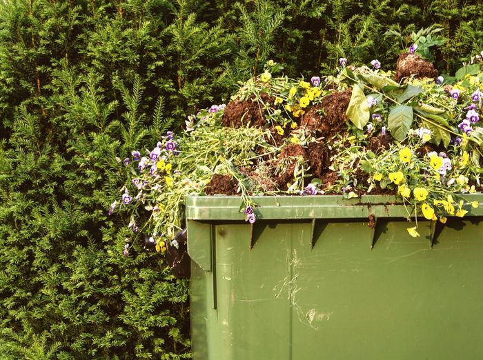 Just flowers in a garbage container Growth Plant Nature No People Green Color Day Tree Leaf Outdoors Flower Beauty In Nature Garbage Flower Collection Flowers Waste Flower Photography Flowerpower Garbage Can Waste Of Beauty Beautiful Flowers Society Criticism Awareness Critical EyeEmNewHere