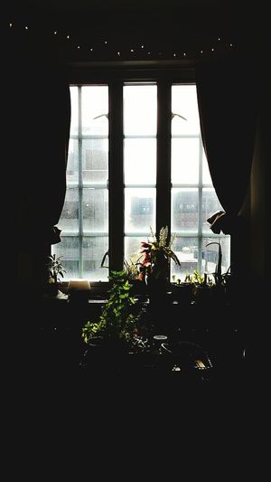 Dorm Room Canfield OSU Plants Window Windowview Inside Insideout Curtains Darkness Contrast