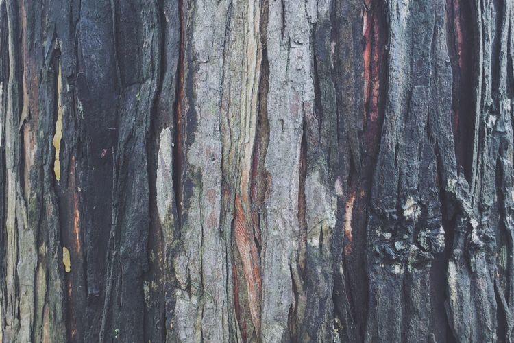 Nature Nature Photography Trees Market