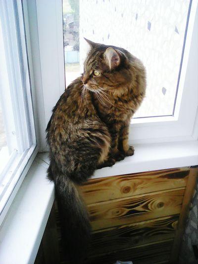 Мой любимый Кузьма загорает кот Котэ 😻 котэ Котейка Кузьма Кузьма The Best CATTY Grey Cat Серый кот Архив2015ОК_