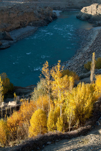 Trees with autumn leaves at the bank of Indus river Autumn India Kashmir Ladakh Buddhism Fall Indus River Leaves Nature No People Outdoors River Scenics - Nature Tree Valley Yellow