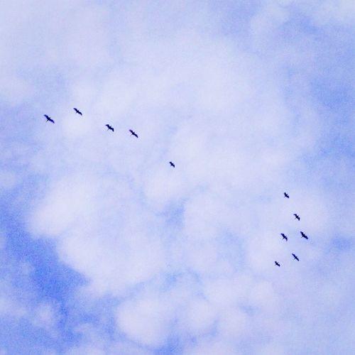 Terbang/Fly Clouds And Sky Sky Bird Clouds