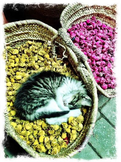 Cat Travel Photography Marrakech Market Market Stall Animal Themes Cat Sleeping FUNNY ANIMALS Basket Not For Sale Pet Portraits