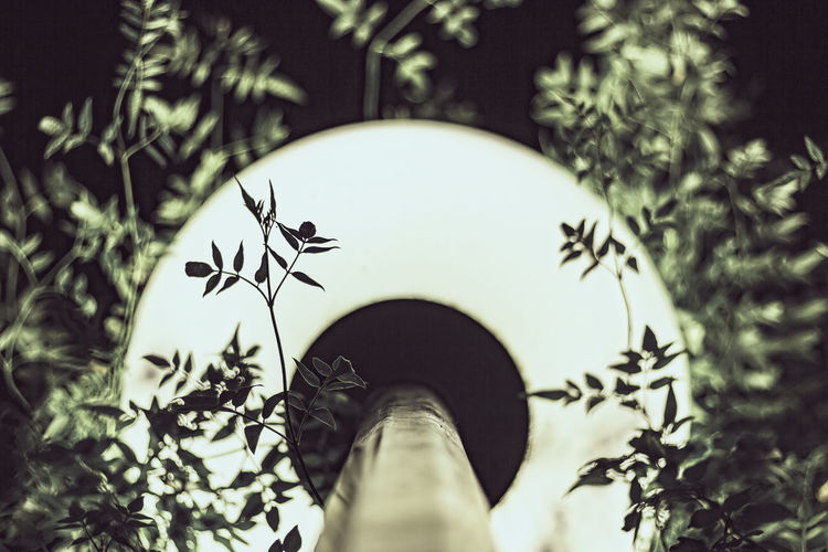 """""""Japanese light"""" Light And Shadow Plant Tree Built Structure Architecture Outdoors Low Angle View Selective Focus Branch Leaf Plant Part Focus On Background Street Light Streetphotography PlantBuilt Macro Photography Macro Lamp Electricity  Electricity Pylon Globe Light Light Equipment Light Bulb"""