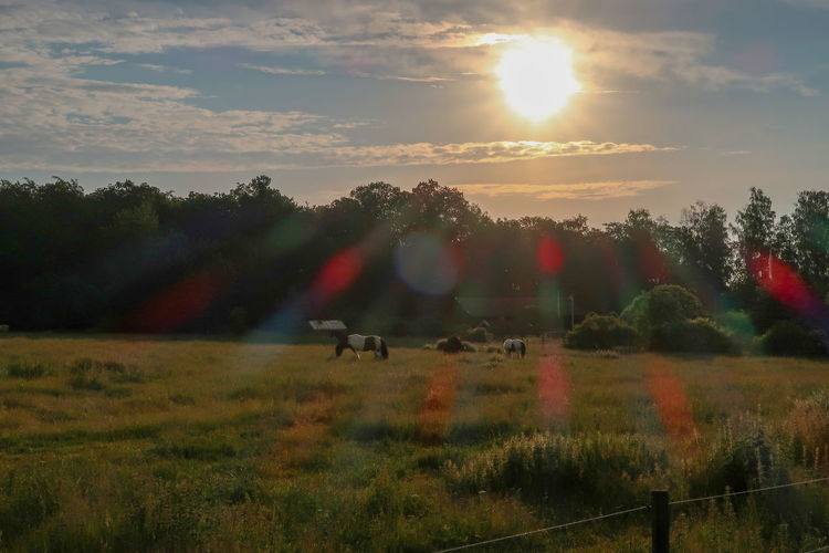 View of animals on field against sky during sunset