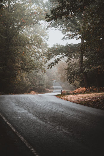 Autumnal Lane Tree Plant Road Transportation The Way Forward No People Direction Nature Street Sign Day City Asphalt Country Road Growth Empty Road Outdoors Road Marking Beauty In Nature Long