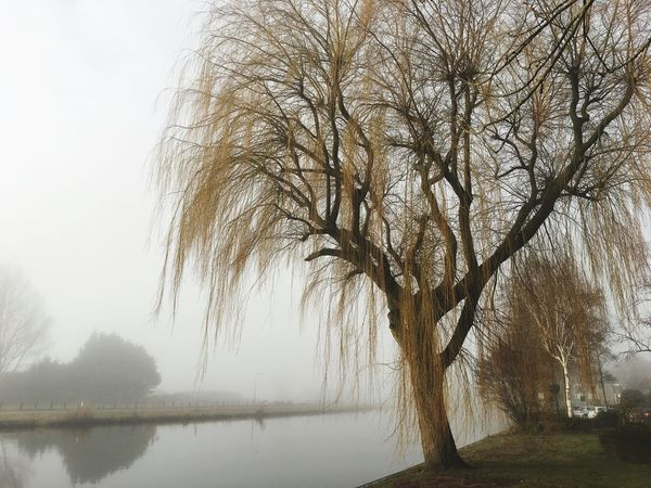 Foggy spring morning After Sunrise Canal Willow Tree Spring Has Arrived Canal Ringvaart Haarlemmermeer Foggy Morning Nature Beauty In Nature Day No People