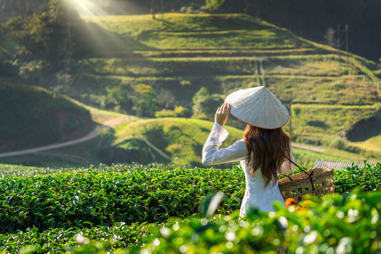 Asian woman wearing Vietnam culture traditional in green tea field. One Person Growth Hat Plant Real People Agriculture Farm Green Color Beauty In Nature Nature Adult Landscape Rural Scene Women Land Sunlight Leisure Activity Field Day Outdoors Farmer Tea Crop Hairstyle Sun Hat