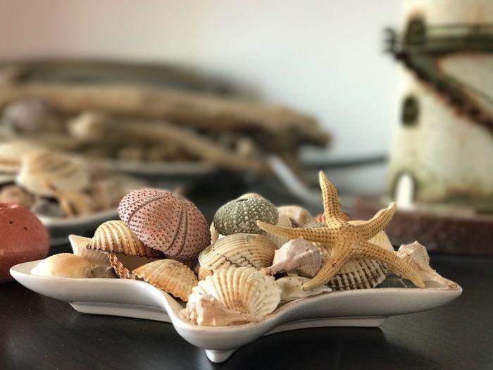 EyeEm Selects Seashells Sea Life Sea No People Close-up Indoors  Day Seashell Animal Shell The Week On EyeEm