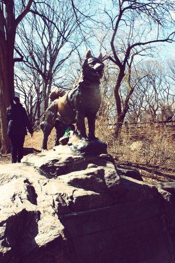 Balto Taking Photos New York Central Park