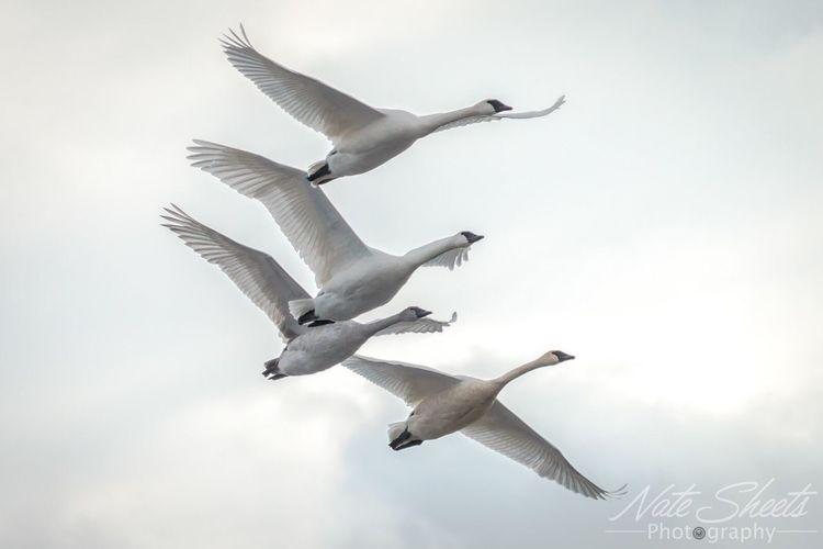 Serenity. Bird