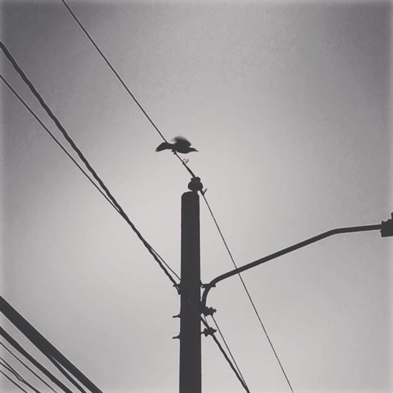 Crow Electricity  Cable Technology Power Line  Nature Animal Themes Day Animals In The Wild First Eyeem Photo