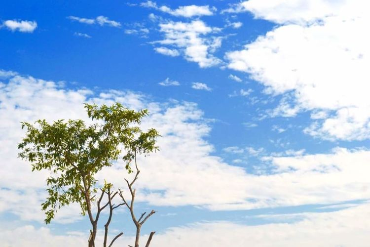 Sky Blue Growth Cloud Beauty In Nature Low Angle View Flower Branch Nature Cloud - Sky Scenics Day Tranquility Tranquil Scene Plant Outdoors Fragility Cloudscape Majestic Single Tree