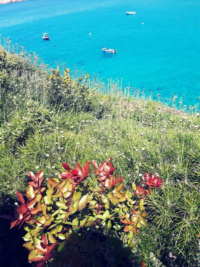 Sea Nature Beauty In Nature No People Grass Flowers Boats Greece Greece Memories Lakonia Diros Cave First Eyeem Photo Break The Mold