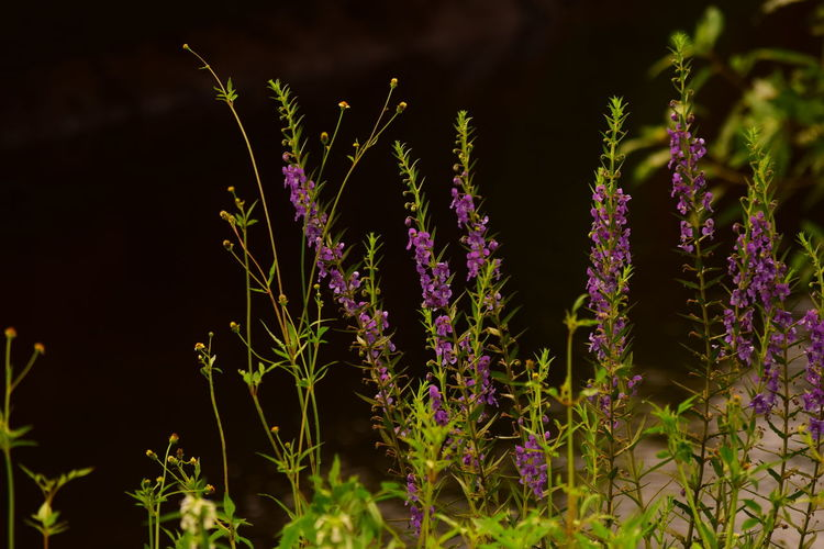 Waterfront Water Background Plants And Flowers Plants Nikon Nikonphotography Nikonphotographer Nikon D3300 D3300 Shadows & Light Flower Flower Head Perfume Herb Herbal Medicine Purple Defocused Close-up Plant Sky EyeEmNewHere Flowering Plant Wildflower Lavender Colored Blossom Plant Life In Bloom Uncultivated