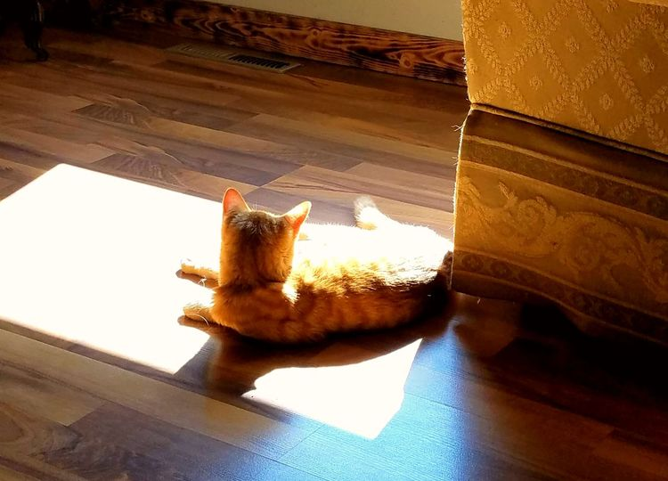 My friend's kitty Roscoe. Kitten Yellow Shadow Check This Out Friend Lounging