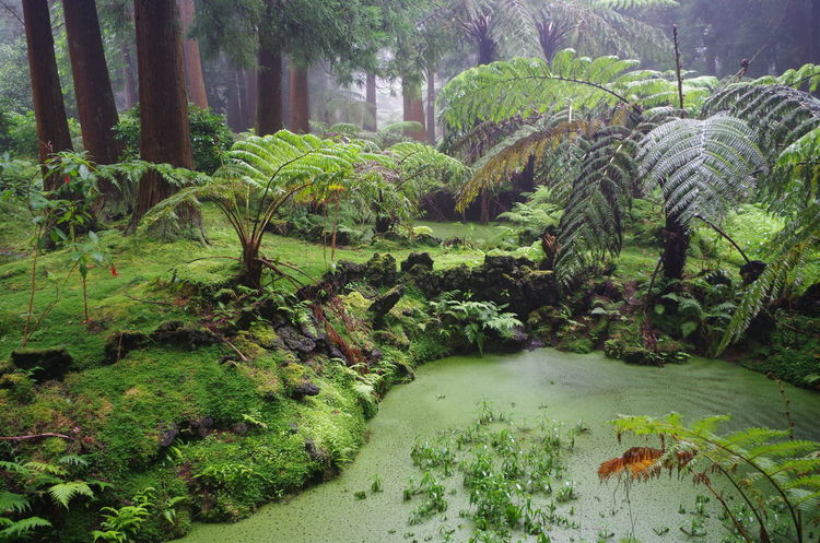 Azores Mysterious Place Pond Beauty In Nature Grass Green Color Growth Island Jungle Nature No People Outdoors Plant Terceira Tranquility Tree Water Woods