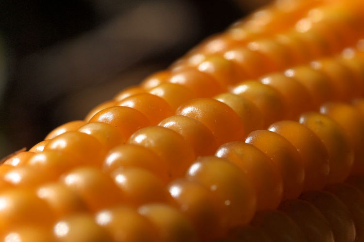 Ripe corn cob Colored Background Shiny Pearl Jewelry Indoors  Wealth No People Selective Focus Close-up In A Row Food And Drink Food Focus On Foreground Cornfield Corn Corn Cob Eating Animal Feed Orange Color Pop Corn 🌽 Ripe