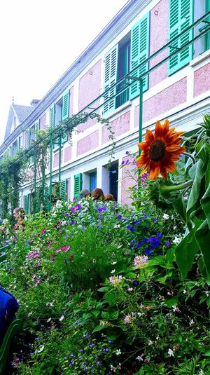 Flowers,Plants & GardenClaude Monet's Garden Claude Monet's Home Eye4photography  EyeEm Gallery The Week On EyeEm Giverny - France