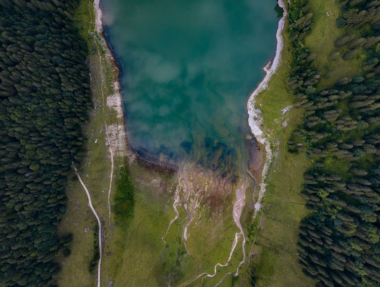 Aerial View Beauty In Nature Close-up Day Nature No People Outdoors Scenics Tree Water