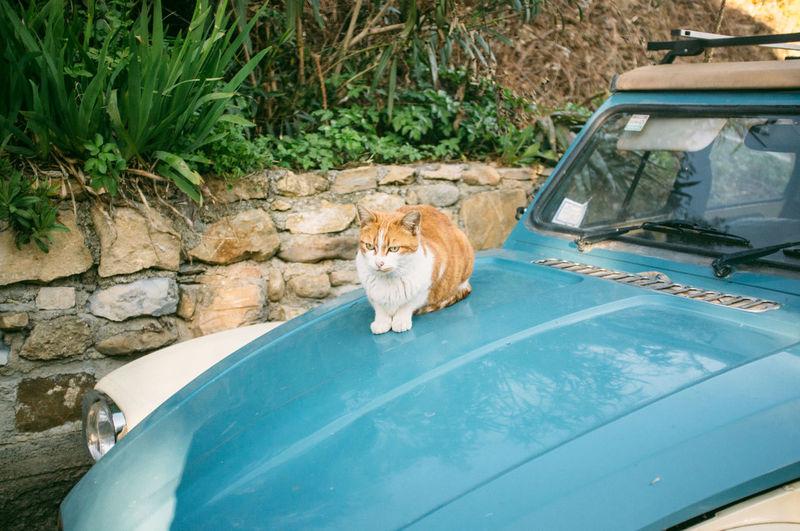 Blue Bussana Vecchia Cat Day Pets Plant