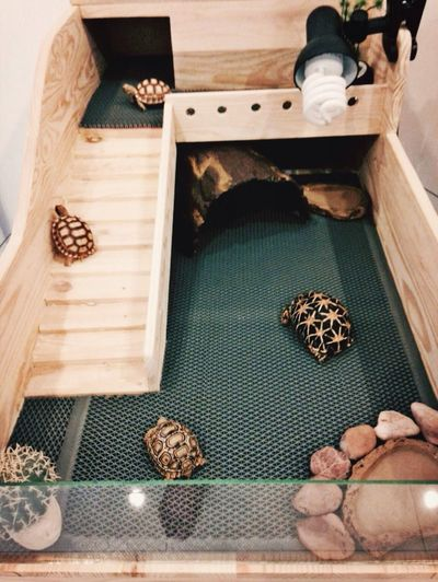 Turtle Cute Pets Animals