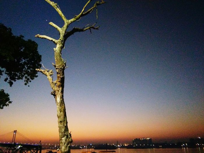 Sunset Sky Tree Outdoors City Nature Beauty In Nature Night Awesome Architecture Vidyasagar Setu Sunset Sky Tree Outdoors City Nature No People Beauty In Nature Night Milky Way