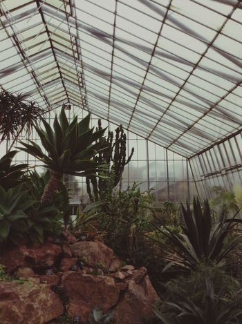 Royal Botanic Garden in Edinburgh. Edinburgh Royal Botanic Gardens Scotland Glasshouse Walking Around Exotic Green Trees