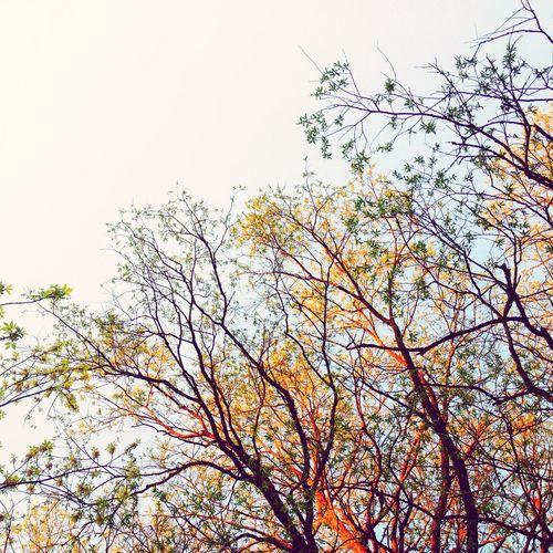 Trees Magic Hour Golden Hour Sky Nature On Your Doorstep
