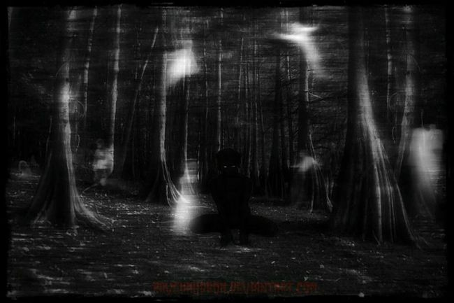 Forest Night No People Backgrounds Outdoors Tree Nature Deviantart Close-up Outside Point Of View Nocturnal