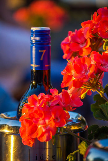 Blumen und Wein - Elegance Exquisite Wine Sinnlichkeit Alcohol Beauty In Nature Bottle Close-up Elegance Beauty Evening Sun Flower Focus On Foreground Guter Tropfen Nature No People Qualität Relaxing Moments Weinland Best Pflanzen & Früchte Hofi Best Shots Hofi Hofis Premium Collection Crafted Beauty
