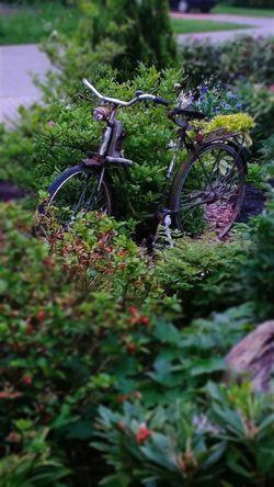 Nature Green Color Plant Day Outdoors Close-up Radfahren Fahrradsattel Fahrrad Fahrradabstellplatz