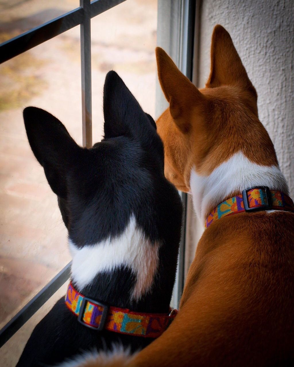 Close-Up Of Dogs By Window At Home