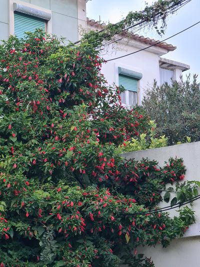 Flowering plants and trees by house against building