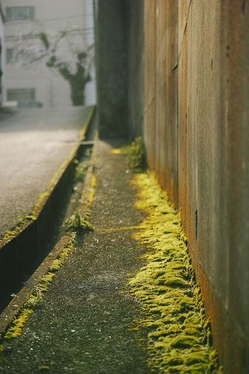 Morning Morning Sun Moss Sloping Road Wall