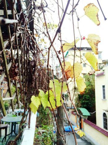 Guangzhou Coffee Shop Tree Leaf