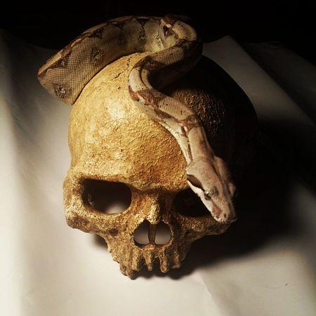 Snek Snakeface Snake Snakesofinstagram reptilesofinstagram skull gomez