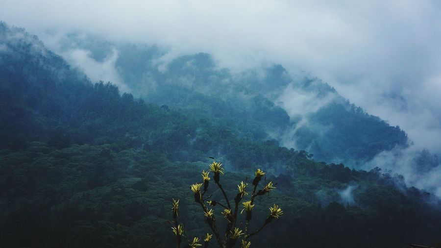 beauty on mojokerto hill Tree Mountain Dawn Tea Crop Fog Forest Agriculture Social Issues Beauty Rural Scene