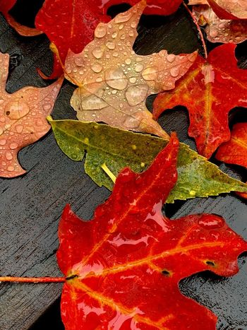 Wet Leaves Full Frame Red No People Day Backgrounds Close-up Leaf Textured  High Angle View Multi Colored Orange Color Weathered