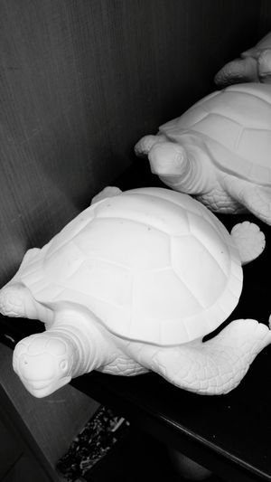 Zarahome Tortoise Black And White Friday