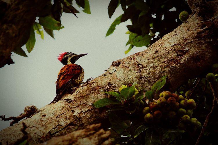 Nature Bird Photography Outdoor Photography Butiful♥ Birds🐦⛅