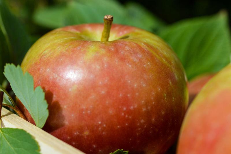 Close-up of apple