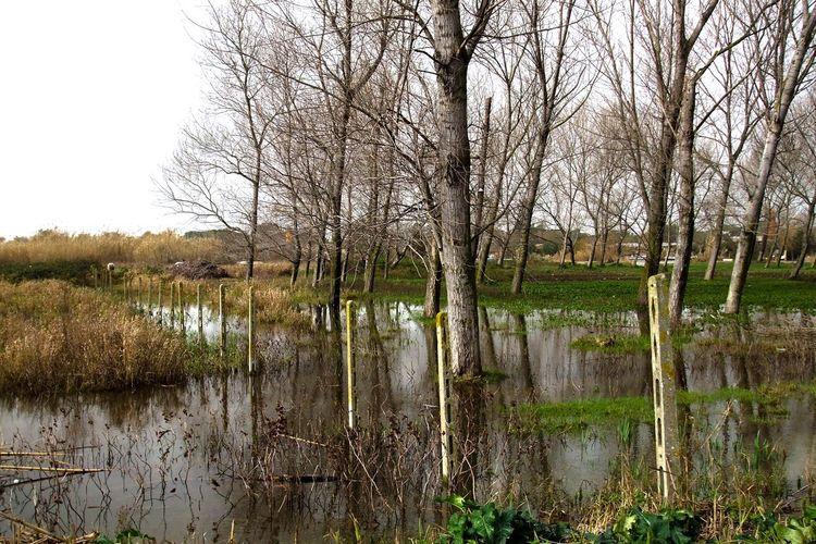 Parco Regionale Acqua Garigliano Nature Nature Photography Pantano Parco Bonifica Lake Stagno