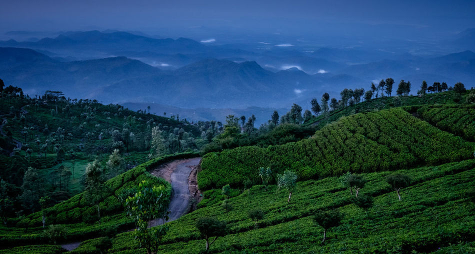 Tea plaintation Agriculture Arts Culture And Entertainment Beauty Beauty In Nature City Field Forest Horizontal Landscape Mountain Mountain Range Nature Night Outdoors Plantation Rural Scene Scenics Sky Social Issues Sunset Tea Crop Travel Travel Destinations Valley Village